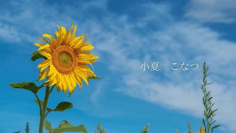 sunflower sky konatsu